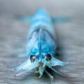 SwissShrimp – Der nachhaltige Shrimp-Züchter aus der Schweiz