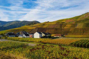 Weinbaugebiet Ihr